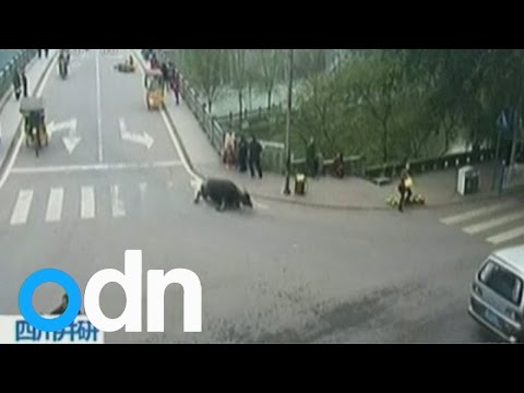 Watch: Buffalo goes on a rampage in China, injuring 14 people