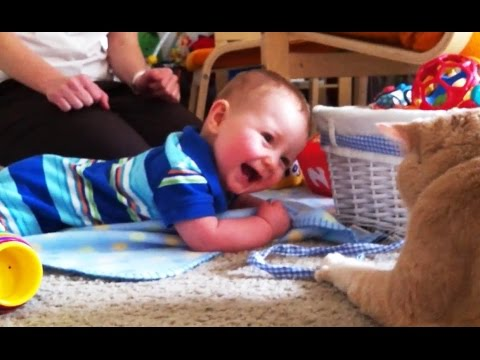 'Babies Laughing at Cats Compilation' || CFS