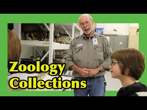 New Behind the Scenes of Zoology Collections at DMNS- Science Sunday | ActOutGames