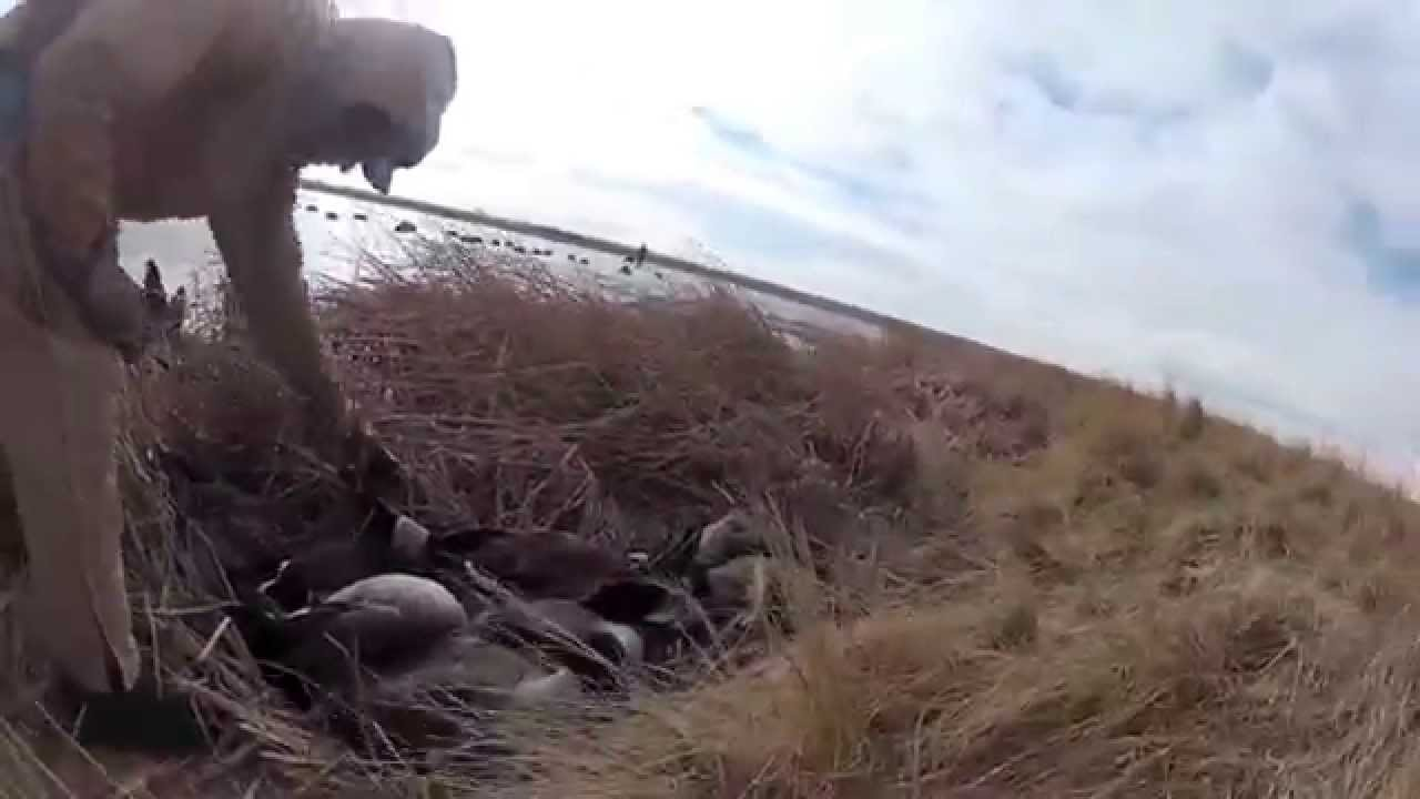 (Goose Hunting Short Film NO MUSIC) Haley the Labradoodle W/ 6 GoPros