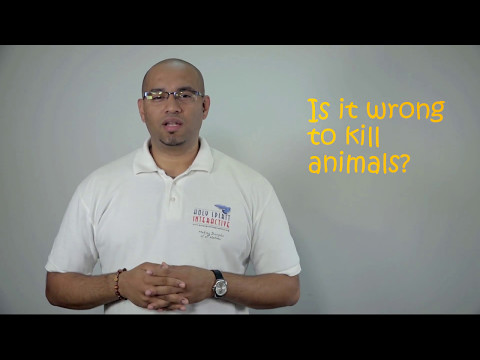 Q35. Is it wrong to kill animals?