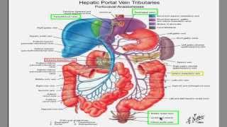 Portal Hypertension lecture!