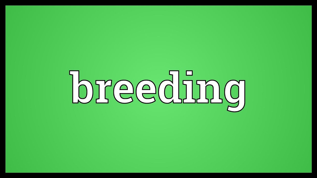 Breed is ... Meaning 83
