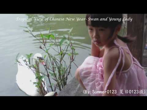 《TropicaI View of Chinese New Year- Swan and Young Lady *观赏热带春节1.☆天鹅与女孩》