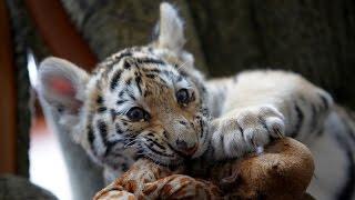Васильевский зоопарк семьи Пылышенко.( Vasilevsky zoo family Pylyshenko)