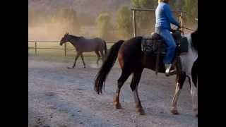 CM Ranch 6am Horse Round Up