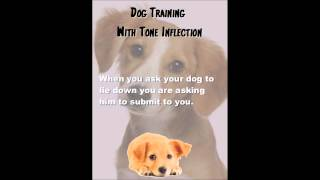 Dog Training With Voice Inflection In South Florida | Dog Training Miami