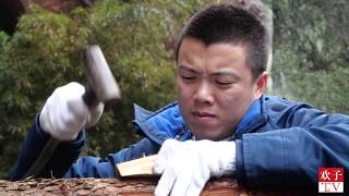 打工仔回农村血拼3年,悬崖边上养土鸡,这立体种养殖你看好吗 thumbnail