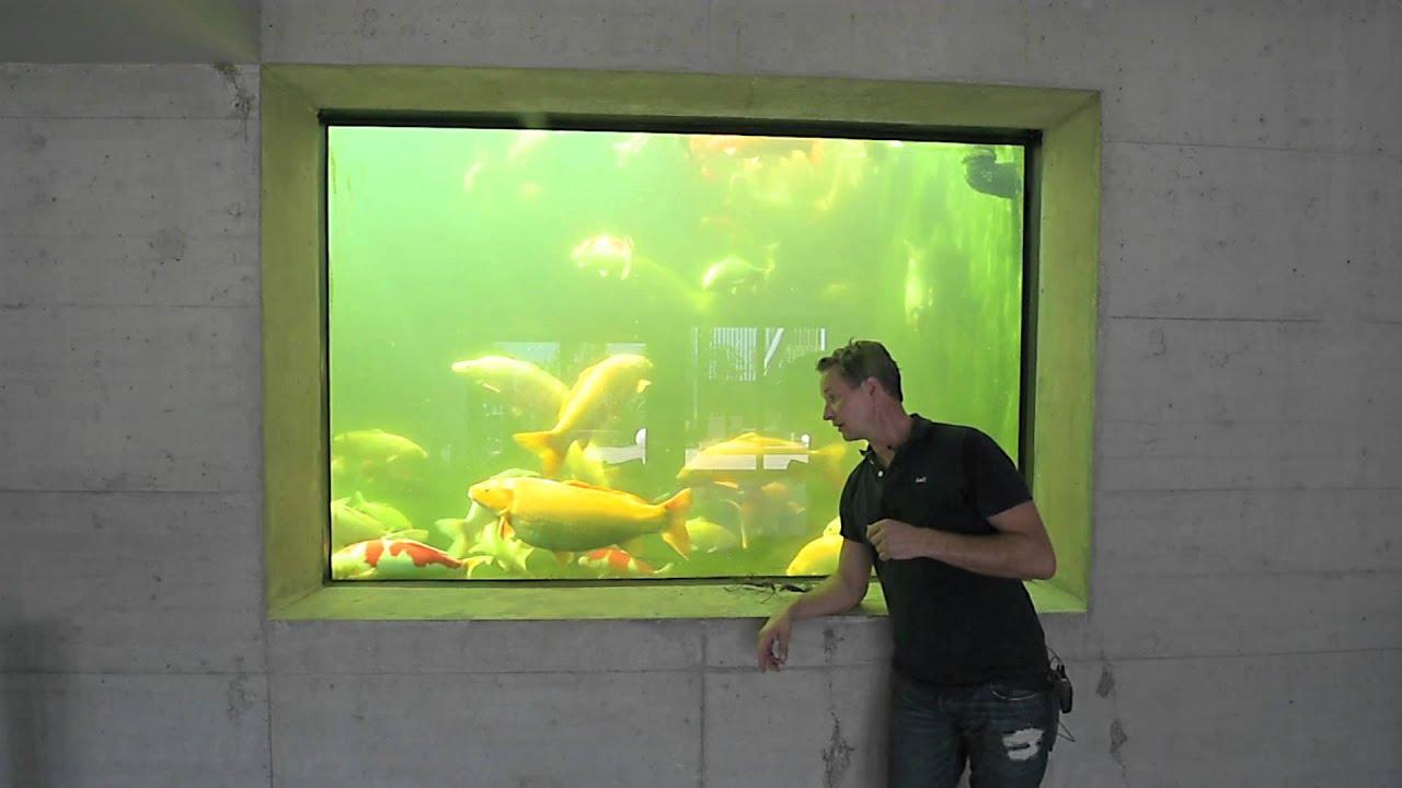 Modern koi blog 415 aquarien und panoramascheiben an for Modern koi blog