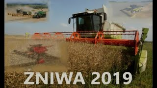 Żniwa rzepak 2019 Mega susza Mega maszyny