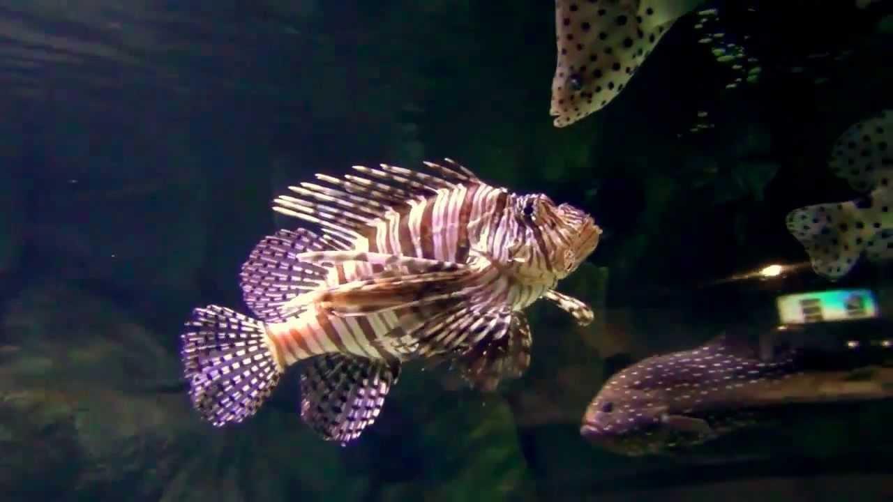 Freshwater aquarium fish in dubai - Relaxing Music Relaxing Nature Scenes Top Aquarium Fish Tank Top Aquarium Fish Hd Relaxing Music Youtube