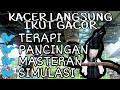 Masteran Pancingan Kacer Gantangan Buat Kacer Macet Bunyi Langsung Ikut Gacor Untuk Terapi Kacer  Mp3 - Mp4 Download