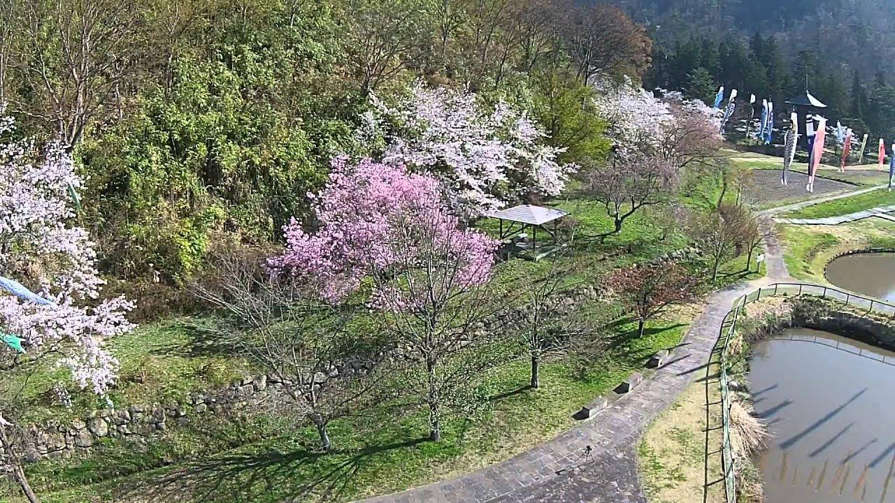 桜の似合う安久津八幡宮(山形県高畠町)を空撮ドローンして ...