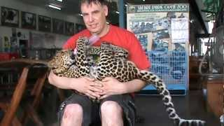 baby leopard in arm and drink milk