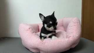 http://passerellewan.jp/puppies/?type=16.