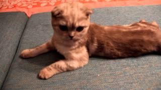 Шоу-Выставка породистых кошек