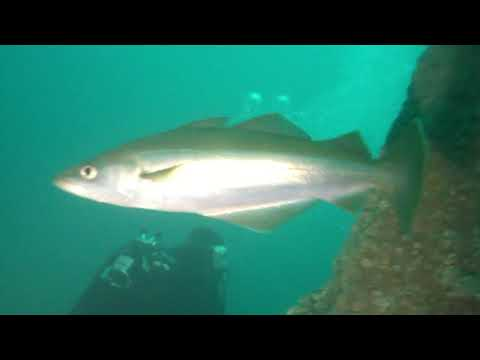 Hinrich Hey, epave, wreck, plongee, scubadiving, nurkowanie, wrak, flip mino hd, underwater, st. malo, dinard