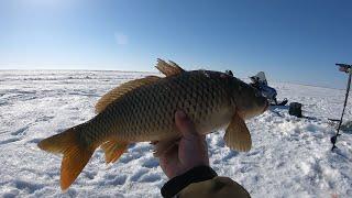 Этот Сазан Сделал Мой День Рыбалка Озеро Чаны