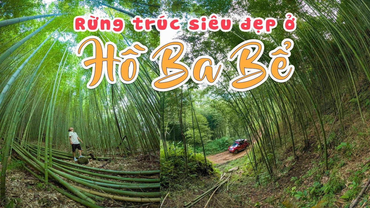 Phát hiện Rừng Trúc siêu đẹp ở Hồ Ba Bể - Đi Ba Bể phải đi con đường này nhé