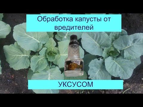 Вопрос: Как защитить листья репы от поедания мошкарой (не химией)?