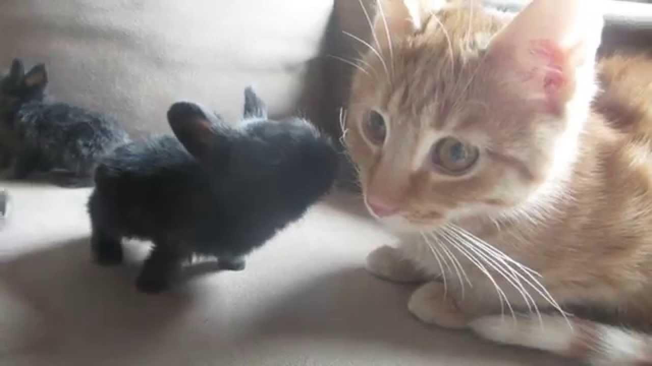 Super Cute Bunnies and Kitties