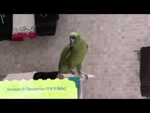 попугай микеша поет беловежскую пущу