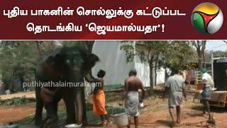 புதிய பாகனின் சொல்லுக்கு கட்டுப்பட தொடங்கிய 'ஜெயமால்யதா'! | Elephant