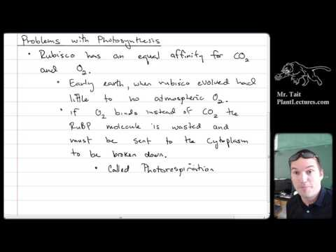 AP Biology - The Cell - Lesson 12: C3, C4, CAM Photosynthesis