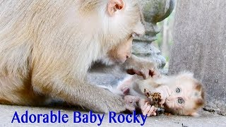 So Sweet & So Adorable Baby Rocky Lay Down On Cement Let Mama Rozy Grooming So lovely