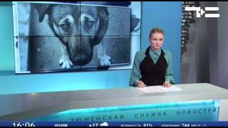 С начала года собаки покусали почти 90 тюменцев