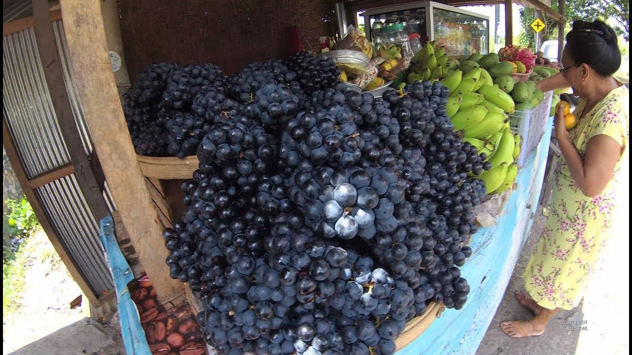 80 Gambar Anggur Bali Terlihat Keren