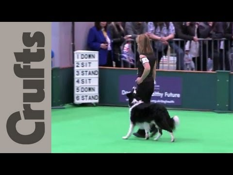 Obedience Championship Dogs Part  2 - Crufts 2012