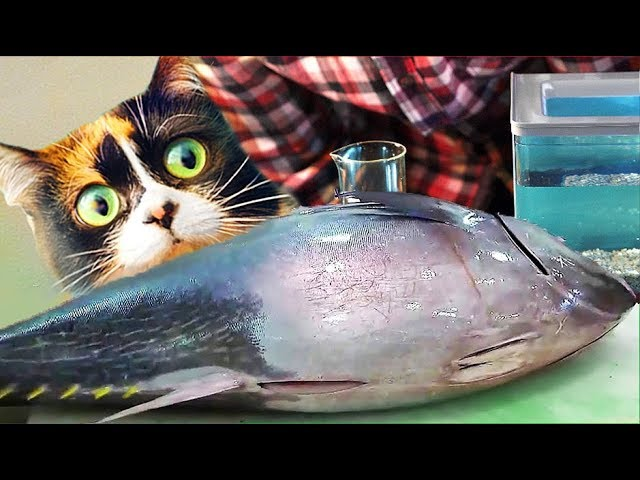 Live Fish From AliExpress! What Happened With Them?