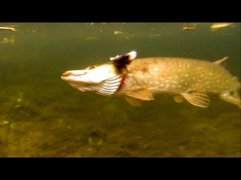 воблер цвет дохлая рыба