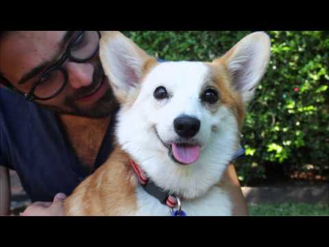 RSPCA QLD's Animal Emergency Rescue - Teacup & Fuzz