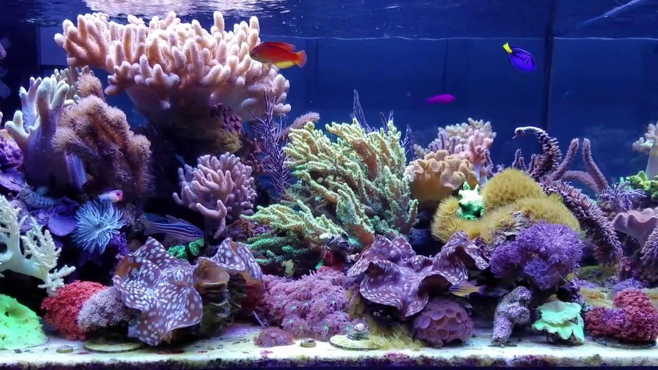 Reefkeeping Magazine - December 2012 Tank of the Month