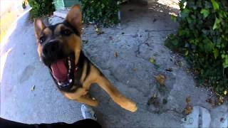 Dog Slow Motion - Gopro