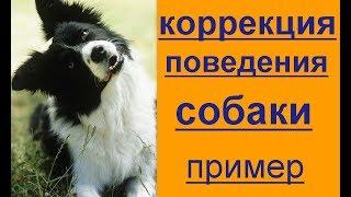 коррекция поведения собаки. пример