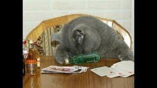 Бывают разные коты:Смешные Коты.