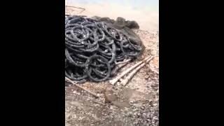 Oyster farming Vietnam