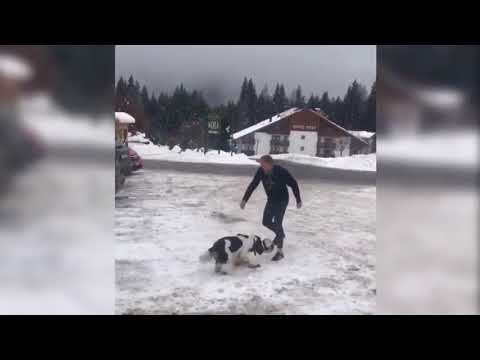Donald Tusk uderzył psa - Donald Tusk hit the dog - kopnął psa