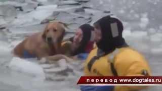 спасение собаки из реки со льдами