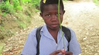 A Dollar A Tree For Haiti