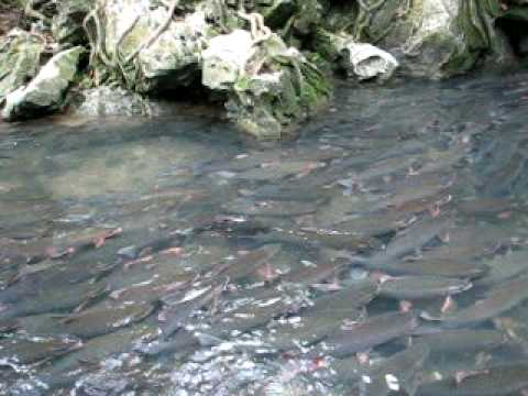 Suối Cá Thần - Cẩm Lương - Thanh Hóa