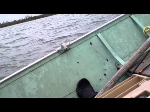 Moose Island Cormorant, Manitoba.