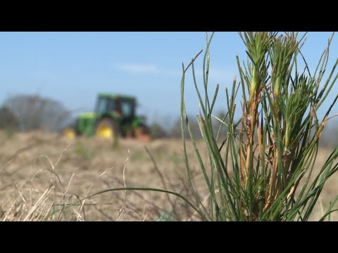 Future Forest | Planting Trees