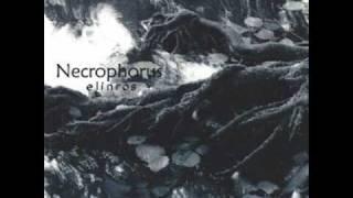 Necrophorus - Sál