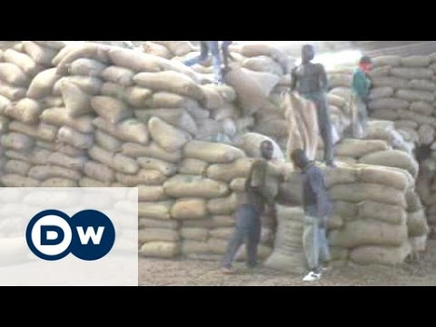 Ivory Coast is world's top cashew exporter | Business