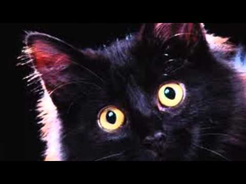 the BLACK CAT song