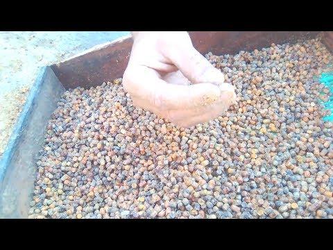 Как собирать пергу у пчел видео